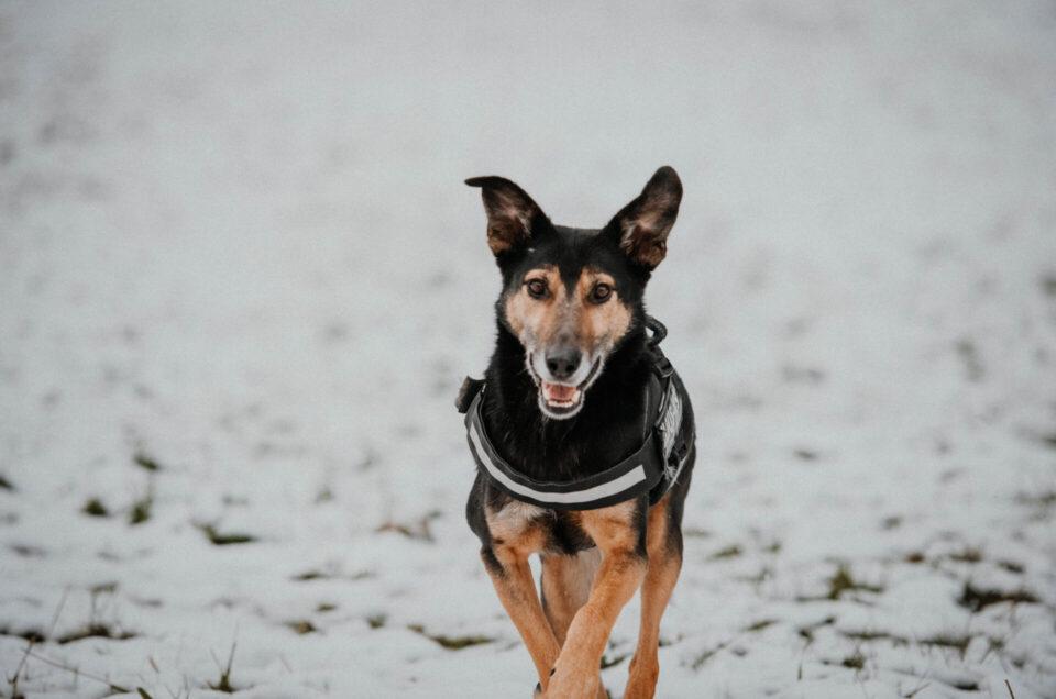 #doglove